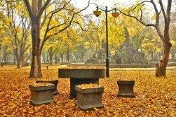 Jinan Fall